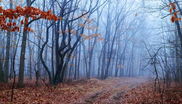 Luz romântica através do nevoeiro brilha na trilha na floresta nublada, durante o dia de outono