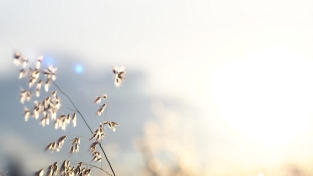 Luz solar através da flor selvagem bela natureza