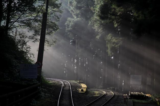 Luz solar na floresta na estrada de ferro na linha de alishan, taiwan