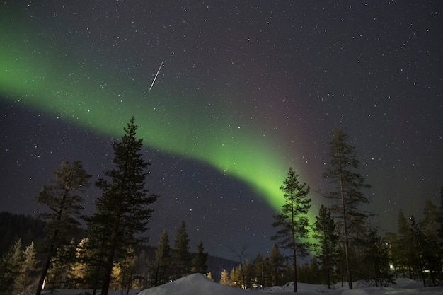 Luzes do norte sobre floresta de neve e estrela cadente