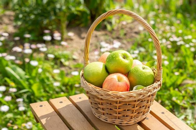 Maçã verde na cesta de vime na mesa de madeira grama verde no jardim tempo de colheita estilo rústico