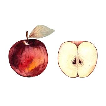 Maçã vermelha e meia maçã elemento isolado ilustração em aquarela
