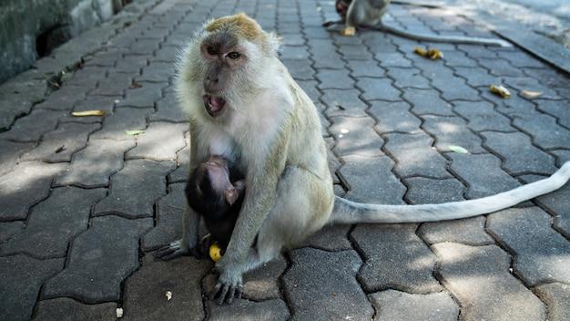 Macaco bebê nos braços da mãe