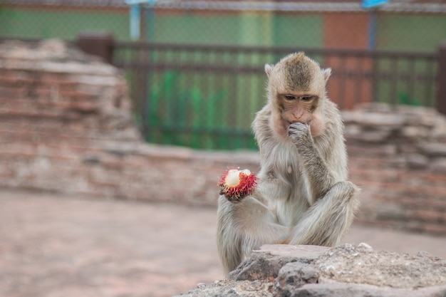 Macaco close-up comendo frutas