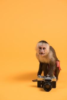 Macaco com câmera vintage retro