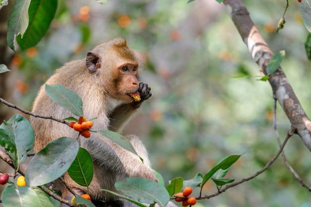 Macaco come comida na árvore na tailândia