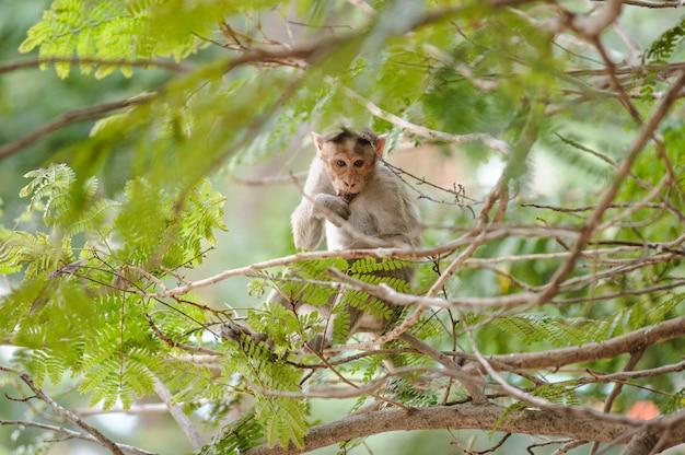 Macaco comendo senta-se na árvore