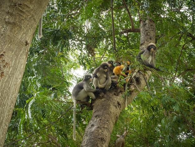 Macaco de folha escura na árvore