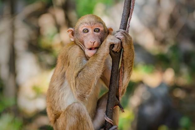 Macaco de retrato na árvore na natureza