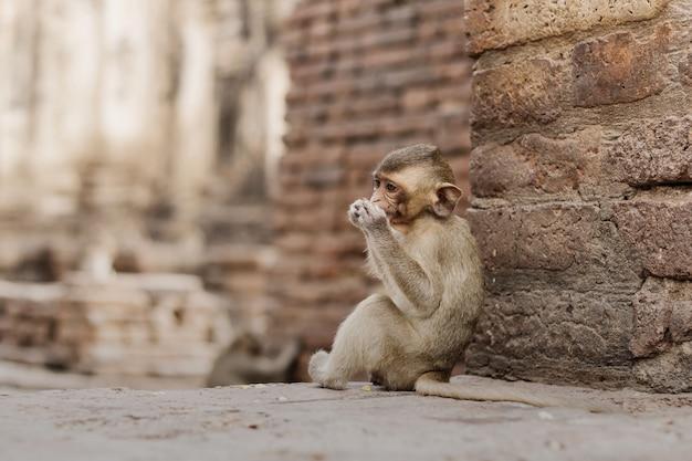 Macaco do bebê está comendo comida.