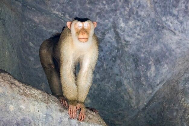 Macaco em uma caverna