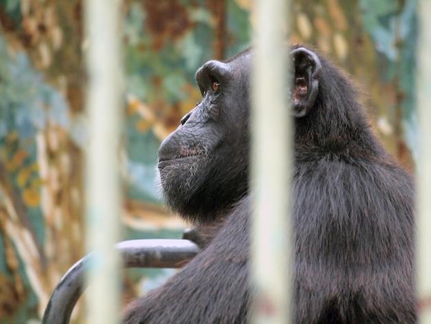 Macaco em uma gaiola