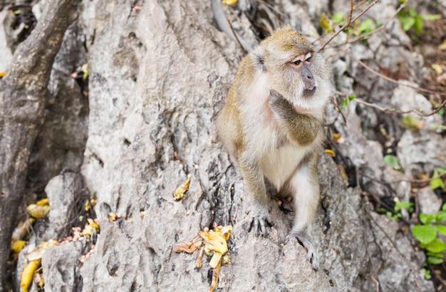 Macaco engraçado em uma floresta natural.