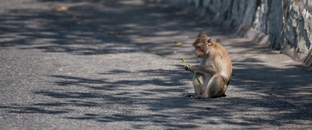 Macaco está agindo