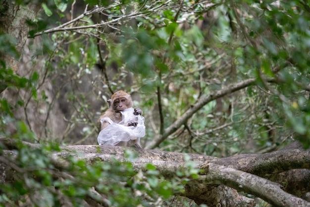 Macaco está preso em um saco plástico.