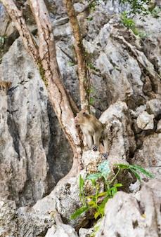 Macaco-macaque de cauda longa na floresta