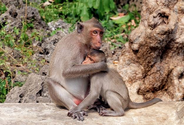 Macaco mãe, abraçando, dela, bebê, macaco