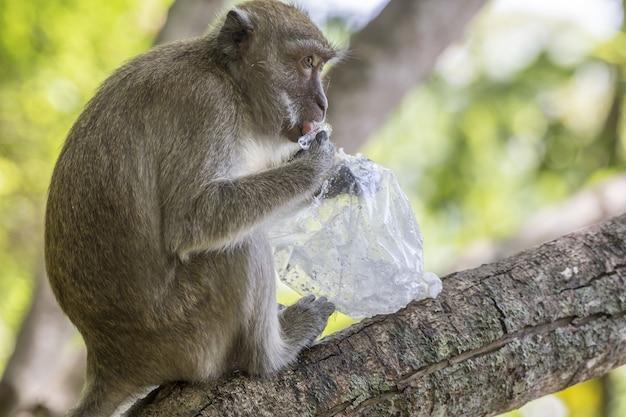 Macaco marrom em galho de árvore
