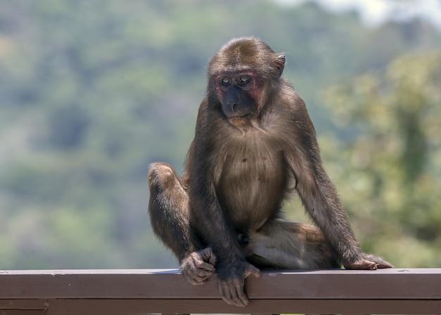 Macaco marrom em seu habitat natural