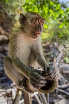 Macaco marrom sentado em um tronco de madeira