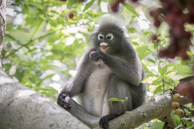 Macaco marrom sentado no galho de uma árvore