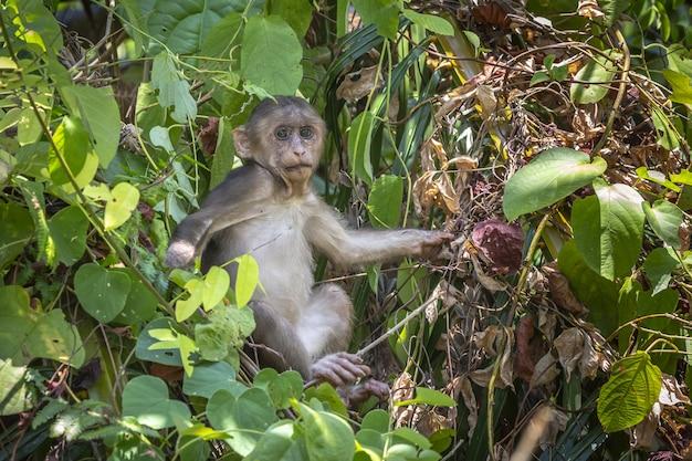 Macaco na árvore na floresta closeup