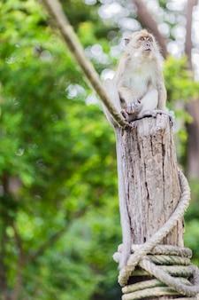 Macaco na coluna de madeira na floresta