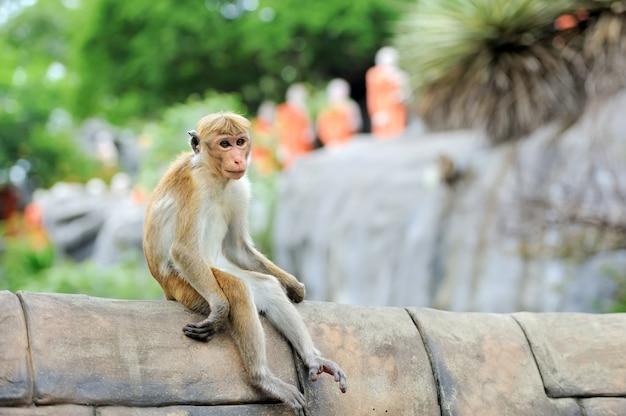 Macaco na natureza viva