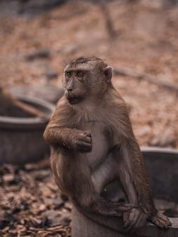 Macaco na selva selvagem na tailândia phuket