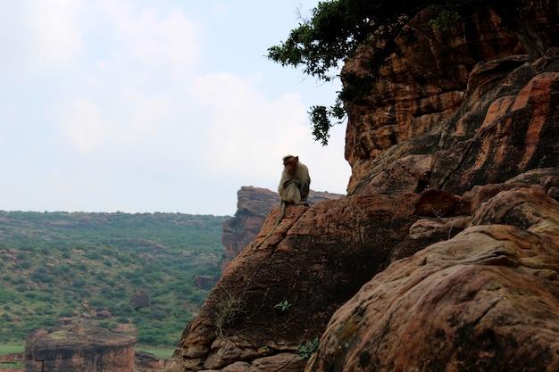 Macaco no templo da caverna de badami na índia