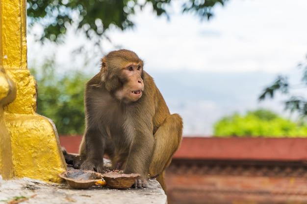 Macaco no templo swayambhunath ou templo do macaco em kathmandu, nepal. foto.