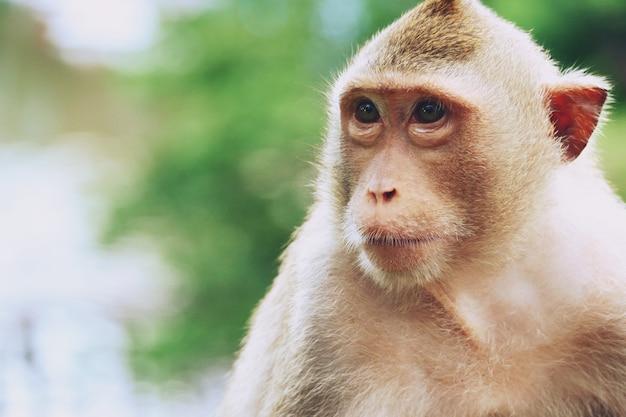 Macaco no zoológico de khao kheow open, pattaya tailândia