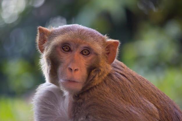 Macaco olhando muito curiosamente