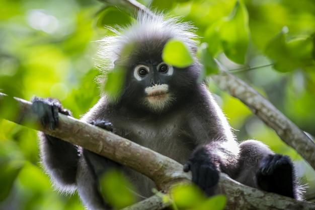 Macaco preto e cinza em galho de árvore