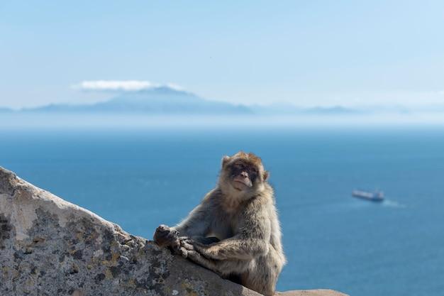 Macaco sentado com navio do mar e montanha em gibraltar