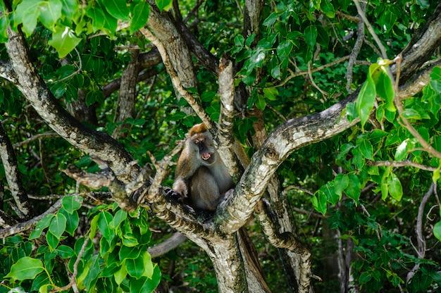Macaco sentado em uma árvore de mangue. macaca fascicularis
