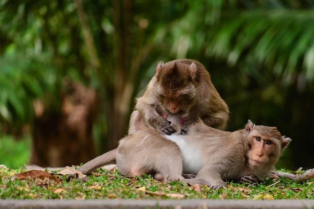 Macaco sentado na natureza
