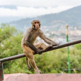 Macaco sentado no corrimão da escada no templo de swayambhunath ou no templo do macaco em kathmandu, nepal. foto.