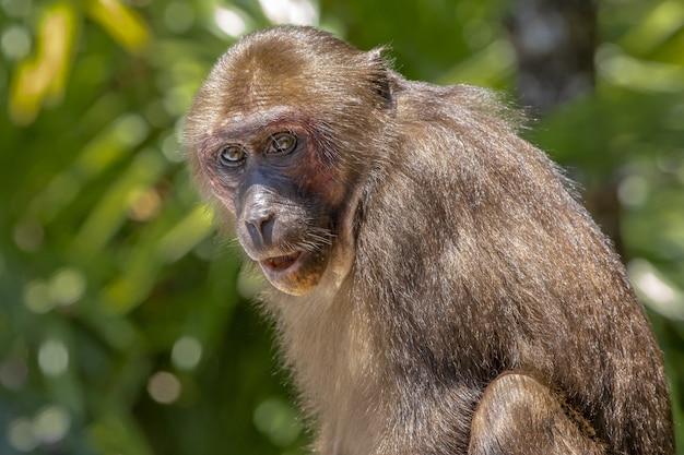 Macaco sentado no galho de uma árvore