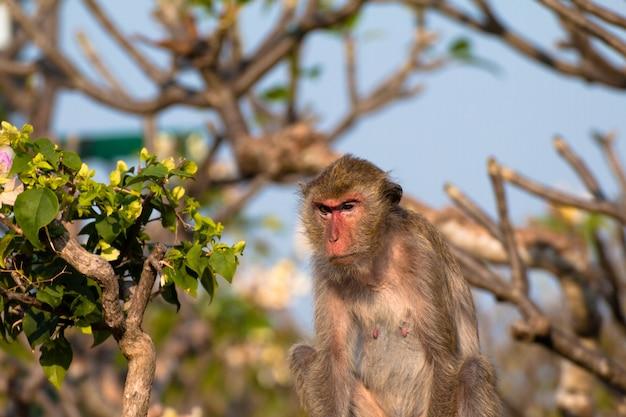 Macaco sozinho na cidade do meio