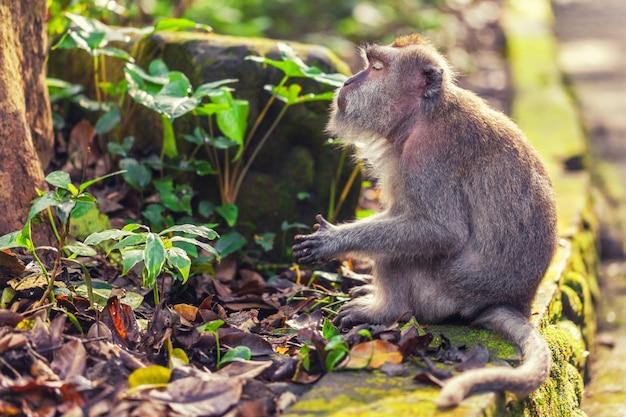 Macaco tranquilo em folhas verdes