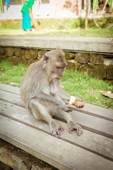 Macacos em ubud bali