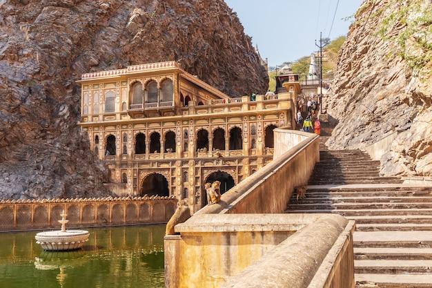 Macacos famosos do templo galta ji, jaipur, índia.