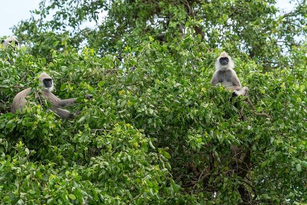 Macacos sentados em uma árvore grega na selva