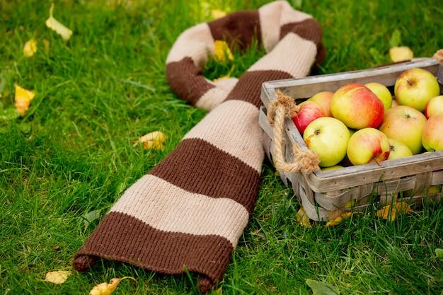 Maçãs em uma cesta e lenço na grama verde em um jardim.