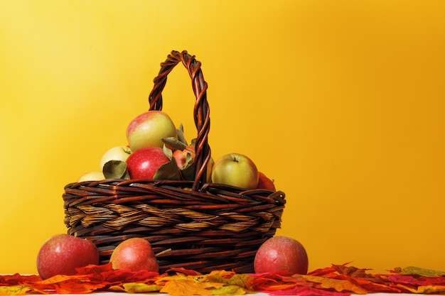 Maçãs em uma cesta nas folhas de outono