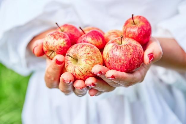 Maçãs frescas, naturais e suculentas nas mãos. as mãos guardam maçãs na perspectiva da grama verde.