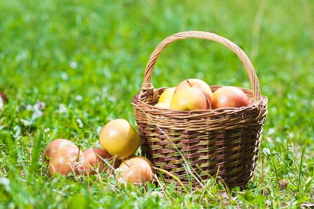 Maçãs maduras em uma cesta na grama