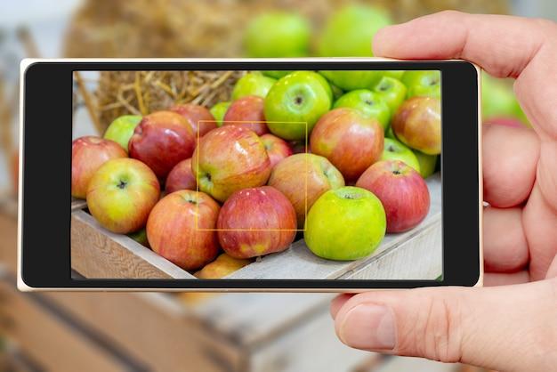 Maçãs na tela do smartphone. maçãs vermelhas e verdes em uma caixa de madeira. colheita de outono de frutas na fazenda.