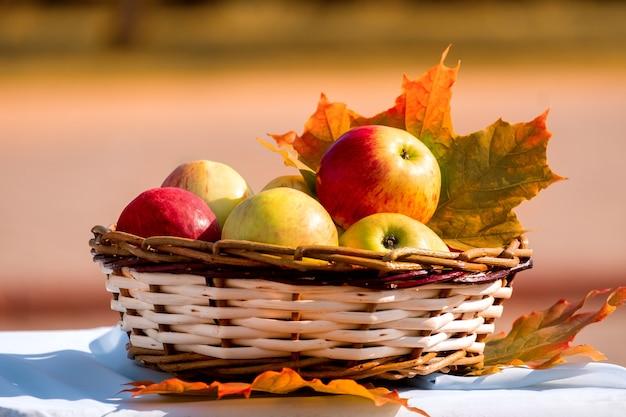 Maçãs orgânicas em uma cesta nas folhas de outono. maçãs frescas na natureza